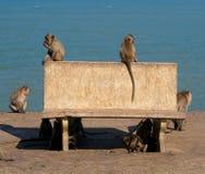 Monos que juegan cerca del mar Imágenes de archivo libres de regalías