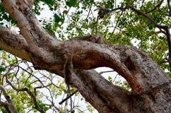 Monos que juegan en el jardín de la capilla de Phra Kal Fotografía de archivo libre de regalías