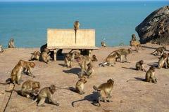 Monos salvajes cerca del mar Foto de archivo