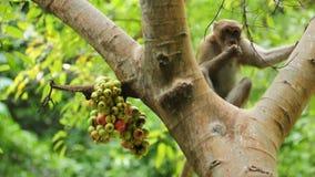 Monos salvajes que juegan en el parque nacional de Khao Yai, Tailandia: almacen de metraje de vídeo