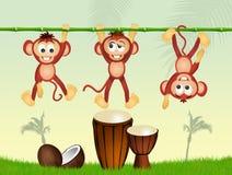 Monos y tambores Imágenes de archivo libres de regalías