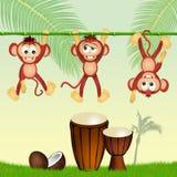 Monos y tambores Imagen de archivo libre de regalías