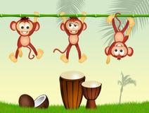 Monos y tambores en la selva Imagen de archivo libre de regalías