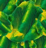 Monotipo verde-amarillo de la acuarela inconsútil Imagen de archivo