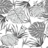 Monotone grey vector seamless beautiful artistic monotone tropic Royalty Free Stock Image