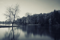 Monotone image of lake landscape with barren tree on island Royalty Free Stock Photo