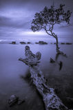 Monotone Sunset in Sabah. Malaysia Royalty Free Stock Image