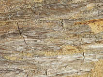 Monotone texture of the wood. Stock Images