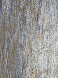 Monotone texture of the wood. Royalty Free Stock Images