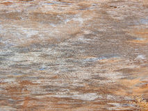Monotone texture of the wood. Royalty Free Stock Image