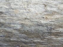 Monotone texture of the wood. Monotone texture in cold colors of the wood Royalty Free Stock Image