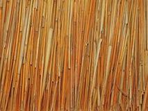 Monotone texture of the wood. Stock Photos