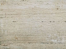 Monotone texture of the wood. Royalty Free Stock Photos