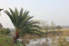 Monpura海岛自然秀丽  免版税图库摄影