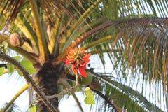 Monpura海岛自然秀丽  免版税库存图片