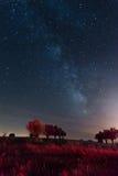 Monsaraz黑暗的天空储备,阿连特茹 免版税图库摄影