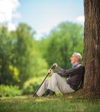 Monsieur supérieur assis par un arbre en parc Images stock