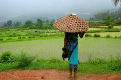 Monsoon. A women farmer standing on the way beside the agricultural field during the monsoon season Stock Photography