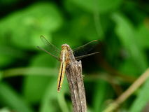 Monsoon Insects Royalty Free Stock Photos