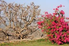 Monsoon Palace garden, Udaipur, India Royalty Free Stock Photo
