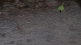 Monsoon rain drops. Rain drops falling on accumulated rain water. Ripple stock video footage