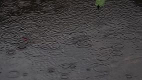 Monsoon rain drops. Rain drops falling on accumulated rain water. Ripple stock footage