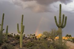 Monsoon Rainbow Stock Image