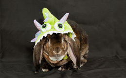 Monster Bunny. A dark brown velveteen rex lop rabbit in a monster costume Royalty Free Stock Photos