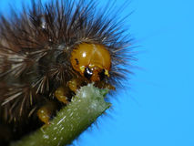 Monster caterpillar Stock Images