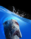 Monster Fish. Monster fish with room for your type Stock Photos