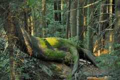 Monster i bergskogen Royaltyfri Foto
