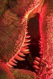 monster Nahaufnahme von Dinosauriergeschöpfzähnen unter schlechtem rotem ligh lizenzfreies stockfoto