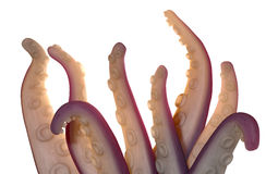 Monster Tentacles isolated Stock Image