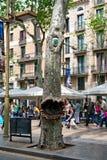 Monster Tree Along La Rambla Street in Barcelona Royalty Free Stock Photography