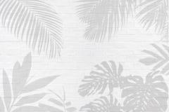 Monstera、棕榈和其他热带叶子叶子植物阴影o 库存图片