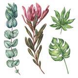 Monstera、葱木属棕榈叶、普罗梯亚木和玉树 免版税图库摄影