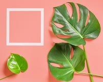 monstera植物热带叶子  图库摄影
