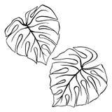 Monstera συρμένο χέρι σκίτσο τέχνης γραμμών μελανιού φυτών φύλλων το τροπικό απομόνωσε το καθορισμένο διάνυσμα Στοκ φωτογραφία με δικαίωμα ελεύθερης χρήσης