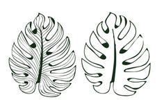 Monstera листьев использовано в дизайнах на белым иллюстраторе выровнянном изолятом картины предпосылки eps 10 бесплатная иллюстрация
