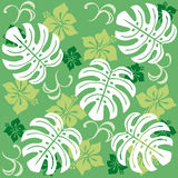 Monstera. Tropical and hawaii image. leaf illustration Royalty Free Stock Photo