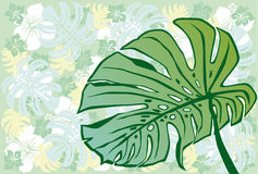 Monstera. This graphic is tropical plants Stock Photo