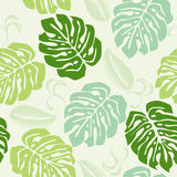 Monstera. This graphic is Tropical Plants Royalty Free Stock Photos