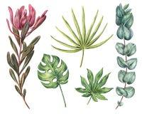 Monstera, aralia, palma di fan, protea ed eucalyptus Immagine Stock Libera da Diritti