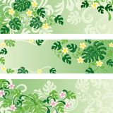Monstera banners set Stock Photo