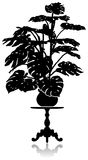 Monstera on the coffee table. A silhouette of a large monstera standing on a round coffee table Royalty Free Stock Image