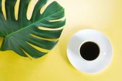 Monstera deja la planta y la taza de café en fondo amarillo Aislado con el espacio de la copia Foto de archivo