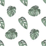 Monstera deliciosa, acuminata i obliqua windowleaf tropikalnej rośliny bezszwowy wzór na białym tle, ilustracja wektor
