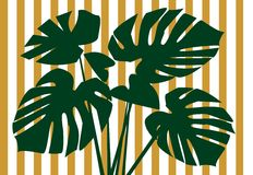 Monstera deliciosa floral background Stock Photography