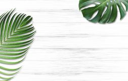 Monstera deliciosa and yellow palm tropical leaves. On white wood background with copy space Stock Photo