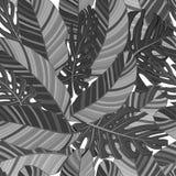 Monstera e de matéria têxtil sem emenda tropical das folhas da banana teste padrão preto e branco isolado Jogo de elementos do ve ilustração royalty free